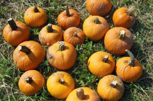 Fall Decor – Pumpkins, gourds & more!