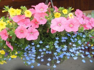 COMING SOON: Hanging Baskets!