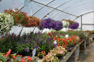 Bedding Plants now available!