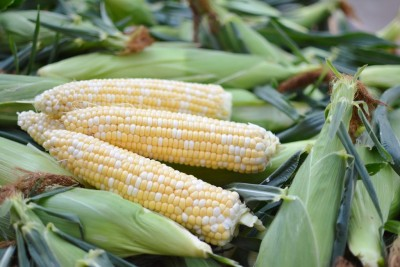 Homegrown Sweet Corn – Tuesday, June 30th
