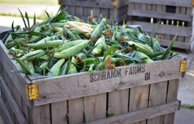 Homegrown Sweet Corn SALE