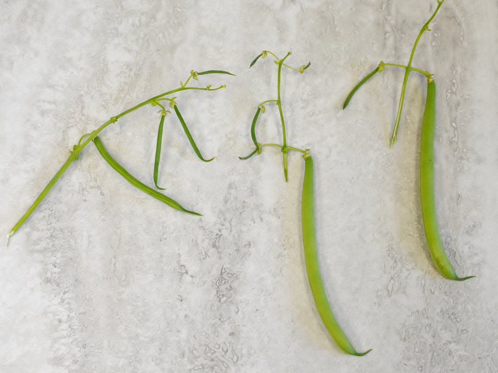 Green Bean Stems