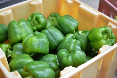 Homegrown Green Peppers!
