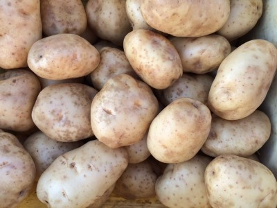 Homegrown Potatoes 20 lbs for $7.50