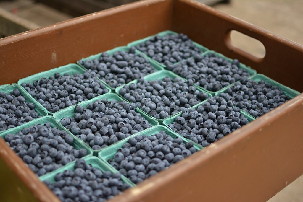 Blueberries Sm
