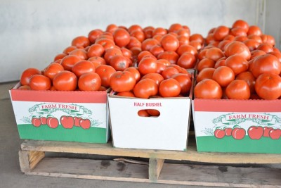 Homegrown Tomatoes for Canning!