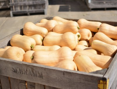 Homegrown Winter Squash (& pie pumpkins) now available!