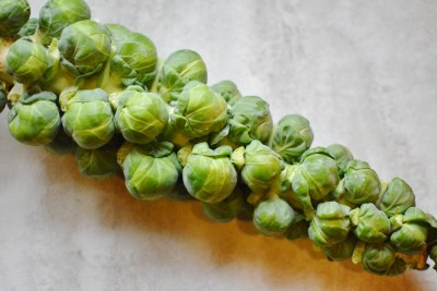 Homegrown Brussels Sprouts!