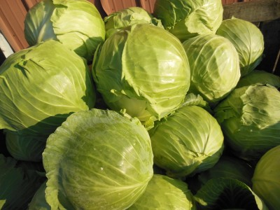 Homegrown new crop cabbage!