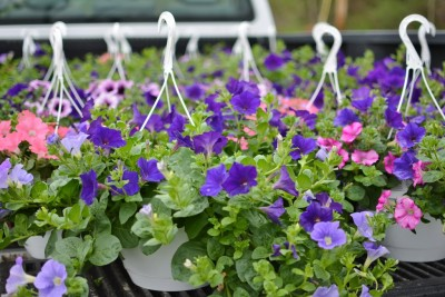 Hanging Baskets! Now available!