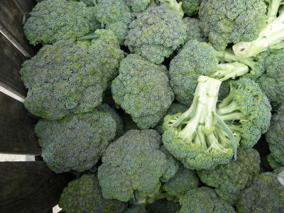 Homegrown Broccoli
