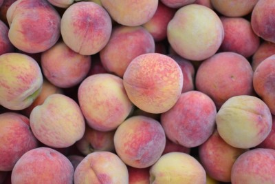 Freestone Chambersburg Peaches