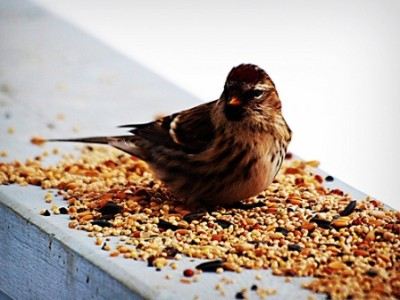 We sell Bird Seed!